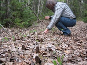 A man picking morel mushrooms at Loch Island Ontario