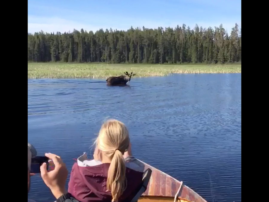 Travel Update for Highway 17 Stops — and some Moose, Bear, Loon Calls and a Fly-In Landing!
